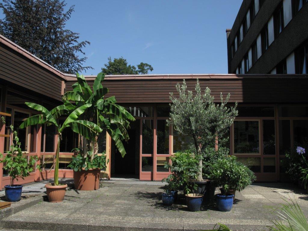 Terrasse mit Banenen und Olivenbaum
